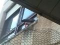 Попугай на подоконнике