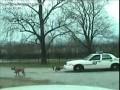 Собаки против полиции