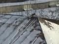 Ворона катается на крышке