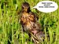 птичка-кормит-птенца