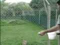 котэ-ямакаси-кормёжка