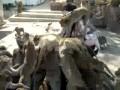 Нападение обезьян