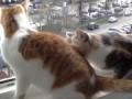 Кошка паникерша