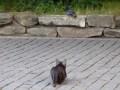 Кот напал на голубя. Забавные кошки