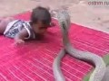 поединок маленького ребёнка со змеёй
