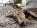 Чудесное спасение щенка