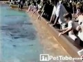 Дельфину надоела публика