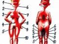 эрогенные зоны женщин и мужчин