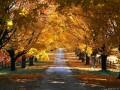 autumn00020
