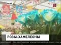 В Пекине показали розы, которые меняют цвет (21.01.2013)