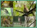 Звуки природы - Голоса птиц