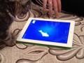 Котейка и современные технологии