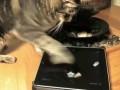 Friskies выпустил видеоигры для кошек