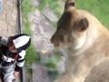 Львица и ребенок вторая часть