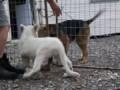 Собака и львенок - лучшие друганы!