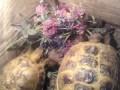 Черепахи!