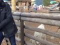 Ревнивый козёл