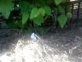 Ежик поселился в огороде