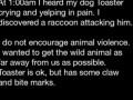 Защитил свою собаку от енота .