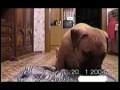 Лучшее видео про собаку
