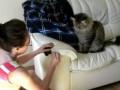 Кот играется