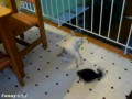 Глупенький котенок