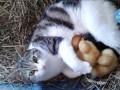 Кошка и утята