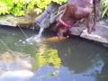 Удивительная дружба собаки и рыбы | Dog & Fish good friends
