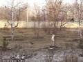Вороны дразнят кота
