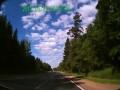 Лось на дороге