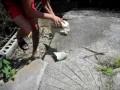 Толпа дебилов кидает камни в крокодилов