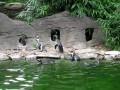 Пингвины и бабочка