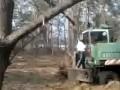 Вырубка леса наказана