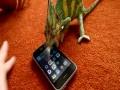 Хамелеон против iPhone