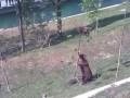 Медведица снимает медвежонка