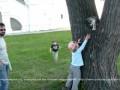 Забавная кошка в Рязанском Кремле