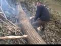 Как правильно пилить деревья