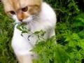 Кошка-говорёшка