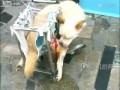 Коляска для собакена