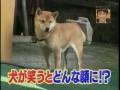 Собака Улыбака.