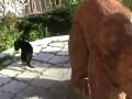В Екатеринбургском зоопарке родился черный ягуар