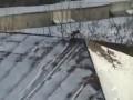 Crow roof tubing (Ворона катается с крыши)