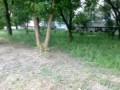 Кабан во дворе