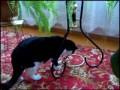 Кот по кличке Героин (CrazyCat)