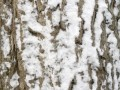 depositphotos_4034961-Bark-covered-in-snow