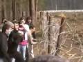 Битва за лес