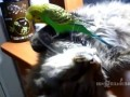 Общительный попугай не дает поспать.