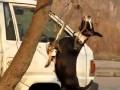 Собака-Акробака