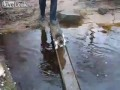 Кот переходит ручей