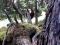 Защита от медведя. Способ №3.